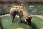 Zambia Zoo