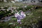 )Beartooth Mountains