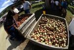 Apples (new, improved fisheye)
