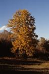 Nov. 1980 - foliage