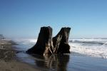 Westport - beach