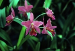 Orchids at Planting Fields