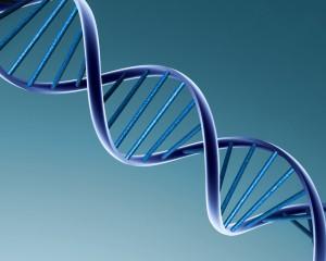 A genética diz: as mutações existem, mas são raras.