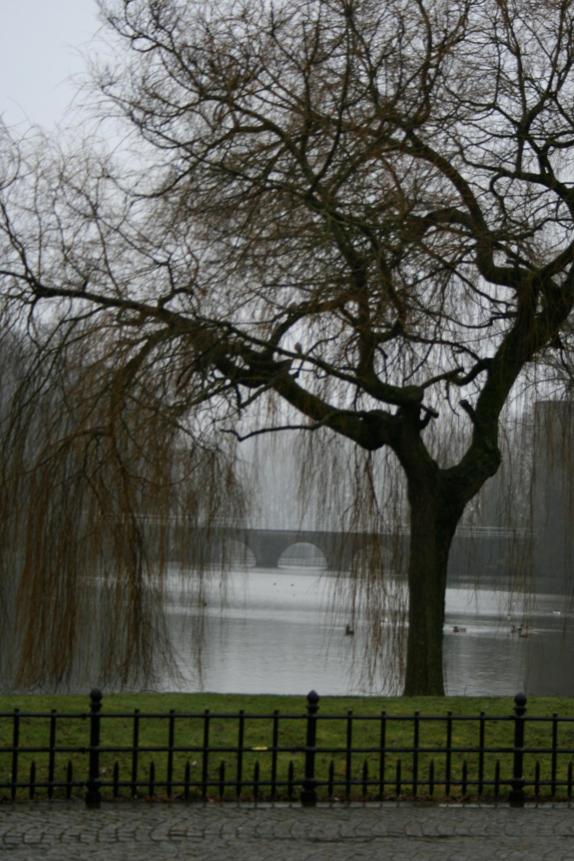 Canaux sous la pluie
