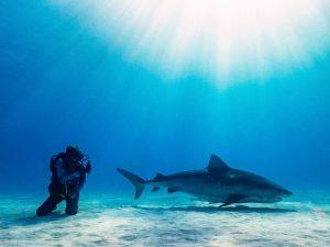 Un jeune de 17 ans nous avertit sur la situation urgente des requins