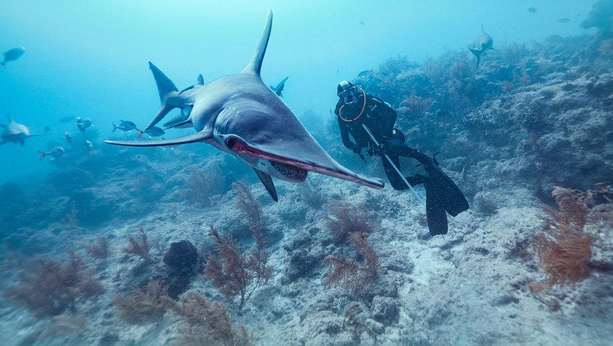 Introduction à la biologie des requins