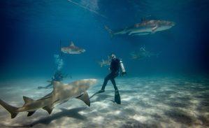 4 Questions essentielles sur les requins pour le grand public