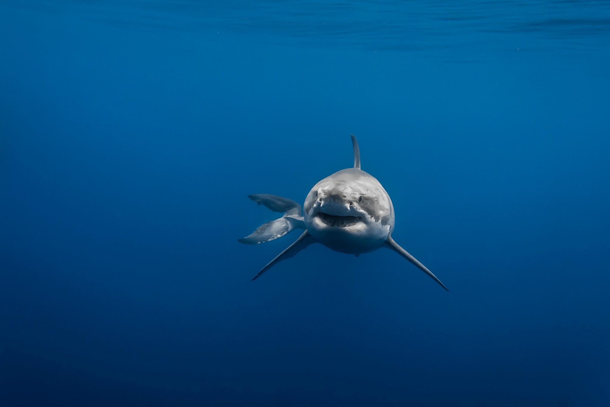 Le requin : un éternel débat ?