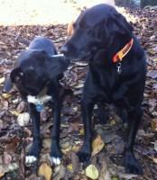 Mr. Samson (left) sharing a tender moment with Mr. Chester