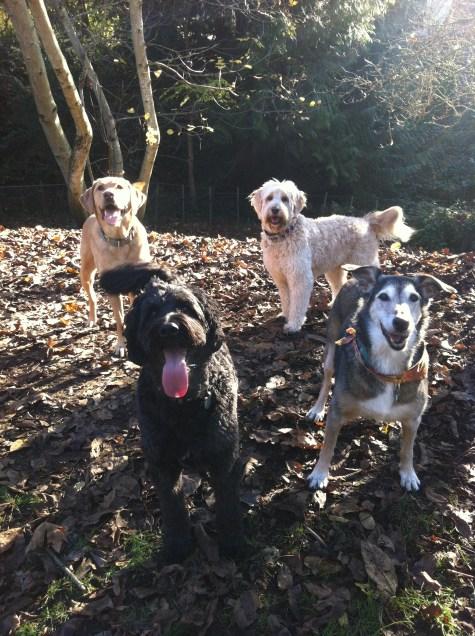 Benny, Jersey, Maui & Riley