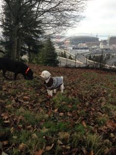 Chester & Apollo