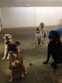 Ellie, Trigger, Buddy Jr, Maui & Chester