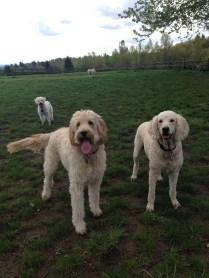 Zoie, Lilo & Apollo