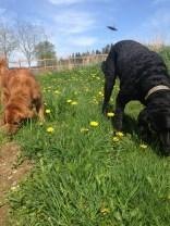 Duke & Rocky
