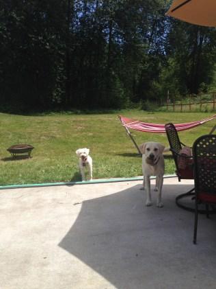 Buddy & Apollo