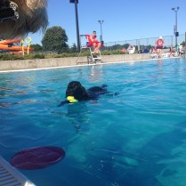 Nice day for a swim