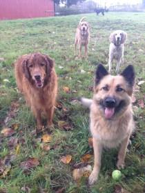 Murphy, Sam, Lilo and Riley