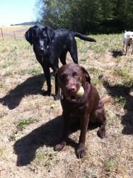 Otis & Harley