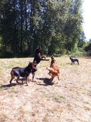 Emmy, Otis, Duke & Beau