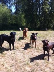 Harley, Duke, Apollo, Emmy & Otis