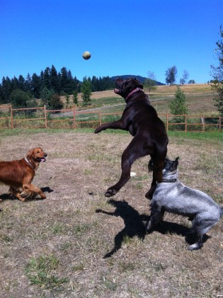 Duke, Otis & Beau