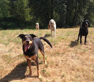 Emmy, Lilo, Rockey & Buddy