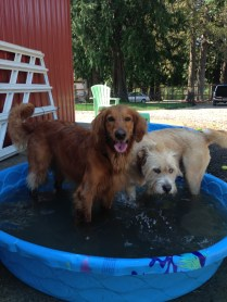 Duke & Buddy
