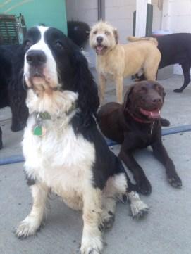 The Boys Ike, Otis & Buddy