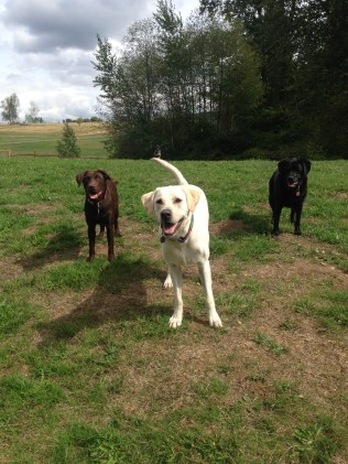 Otis, Bud Jr & Lilly