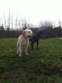 Buddy & Otis