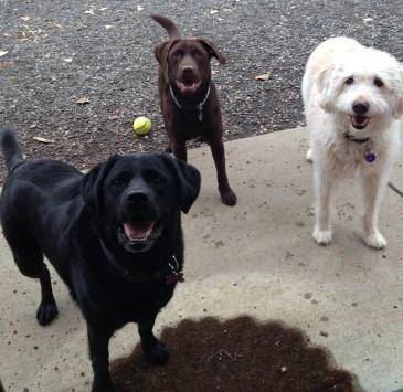 Lilly, Otis & Baylee