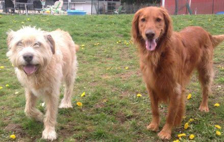 The boys Bud Sr & Duke