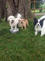The Little Boys Teddy, Spencer & Lemu