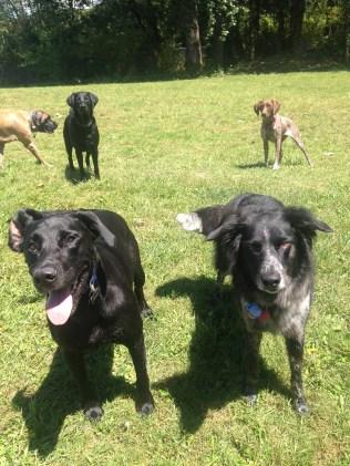 Oscar, Cinder, Harley & Ruby