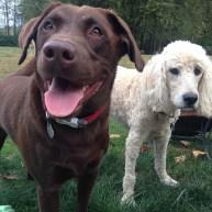 Otis & Lilo