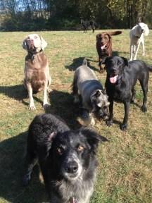 Cinder, Beau, Oscar, Otis & Max