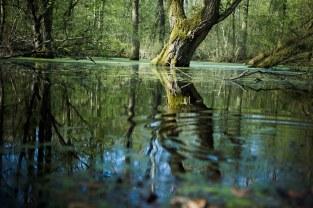 Balade en Forêt (5)