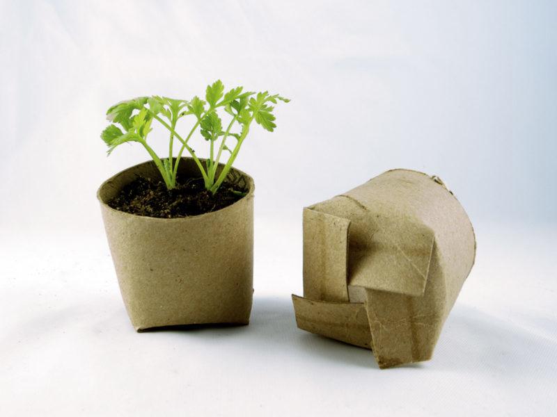 contenant pour semis