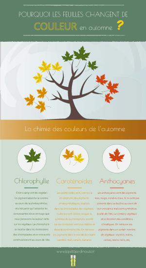 infographie feuilles d'automne