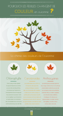 infographie feuilles