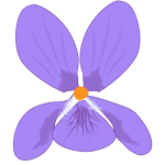 Violette dessin