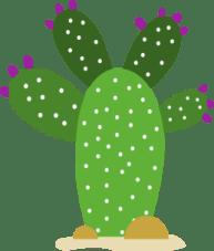 cactus raquette à fleurs