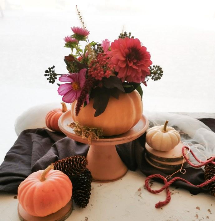 Zucche Fiorite di Plantina Flowers