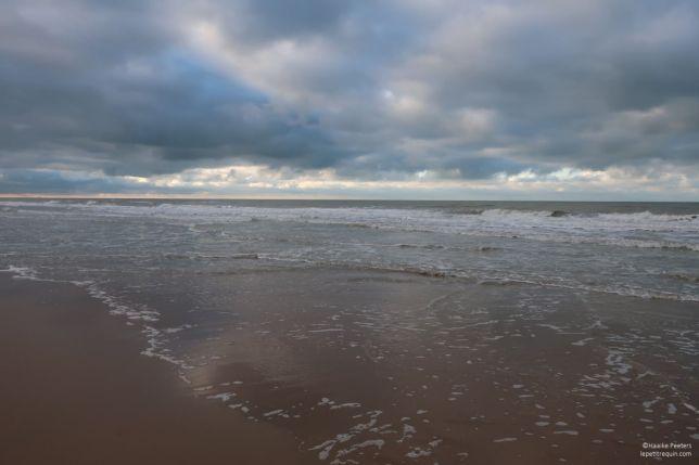 Noordzee Oostende (Le petit requin)