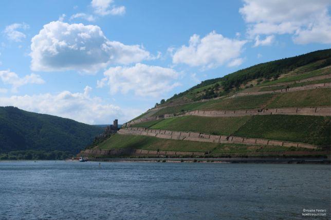 Schloss Ehrenfels Rhein (Le petit requin)