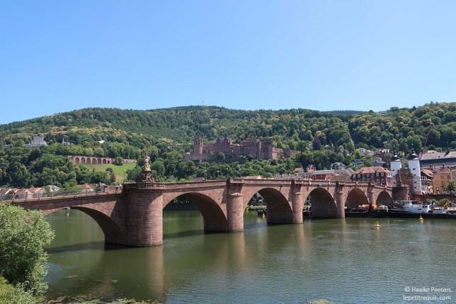 Schloss Heidelberg (Le petit requin)