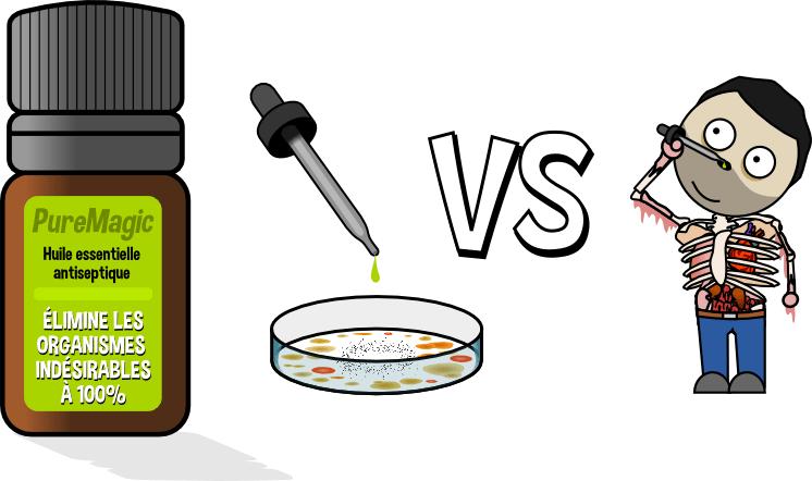 huile essentielle antibactérienne antifongique antiseptique in vitro