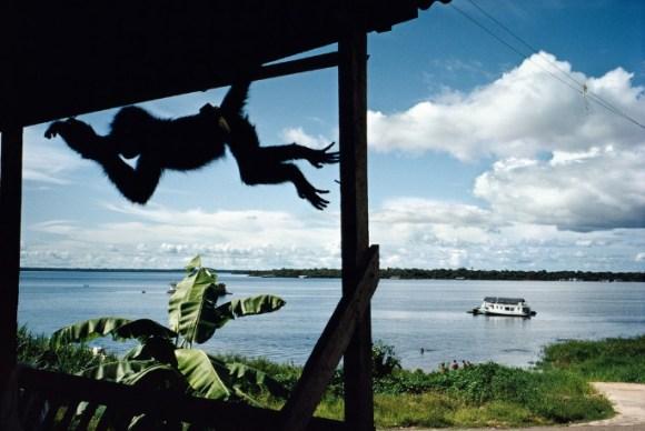 un singe se balance sur le toit d'une maison en bois