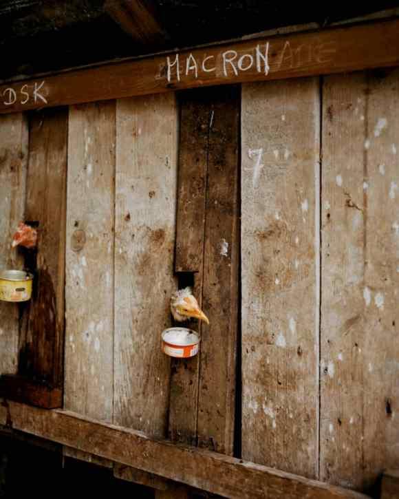Des têtes de poules et de coqs presque décapités en Guadeloupe photographiés par Gregory Halpern