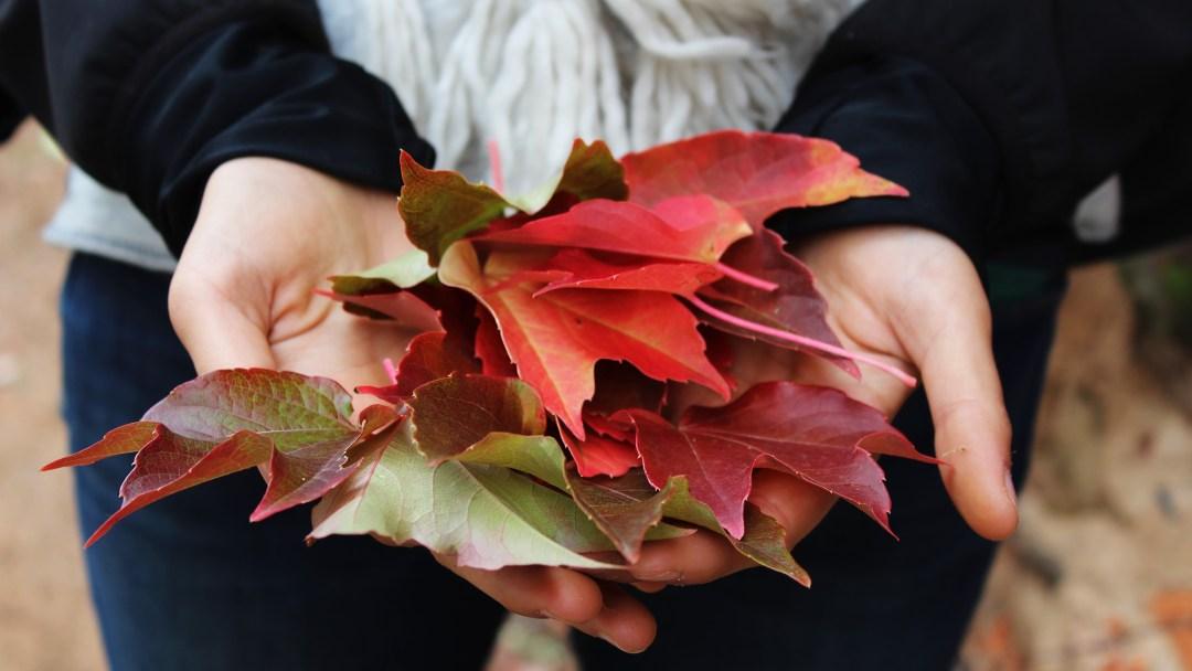 jesień da się lubić
